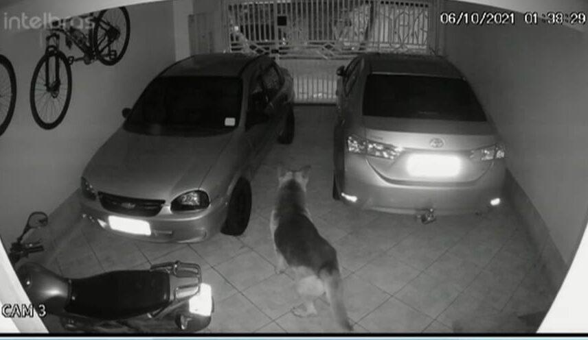 cão na garagem de casa furtada